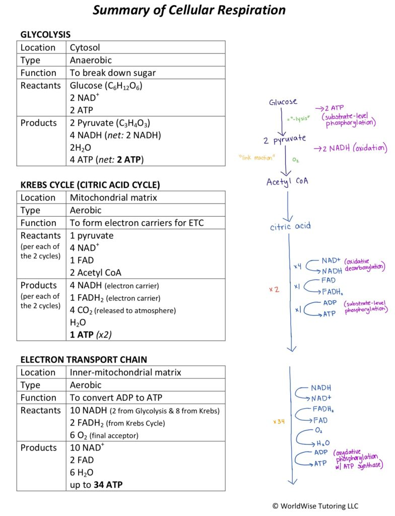 what are all the reactants along with products in cellular phone respiration